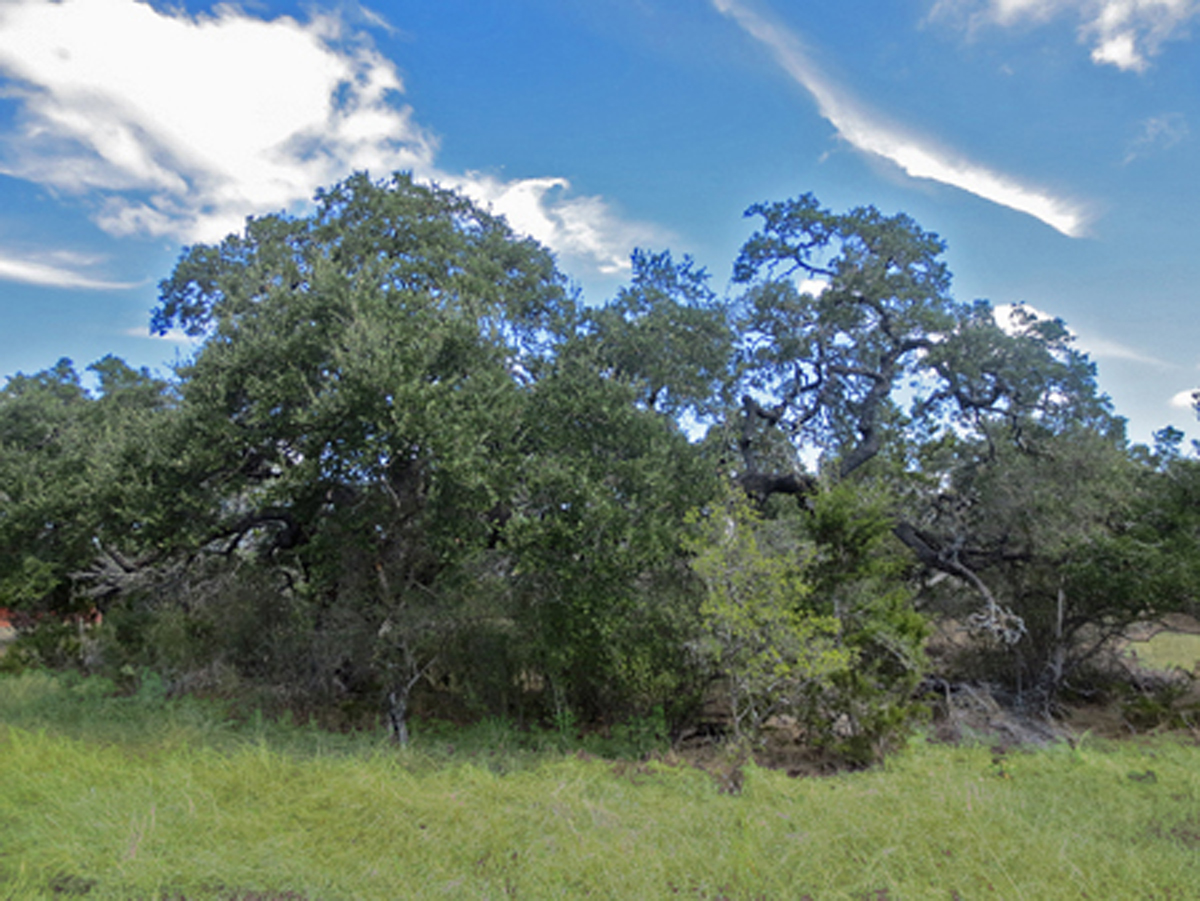 View of the variety of trees and brush.