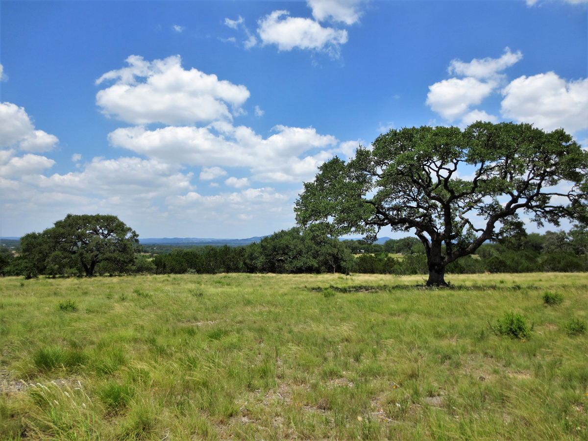 Large oak tree with view in background.