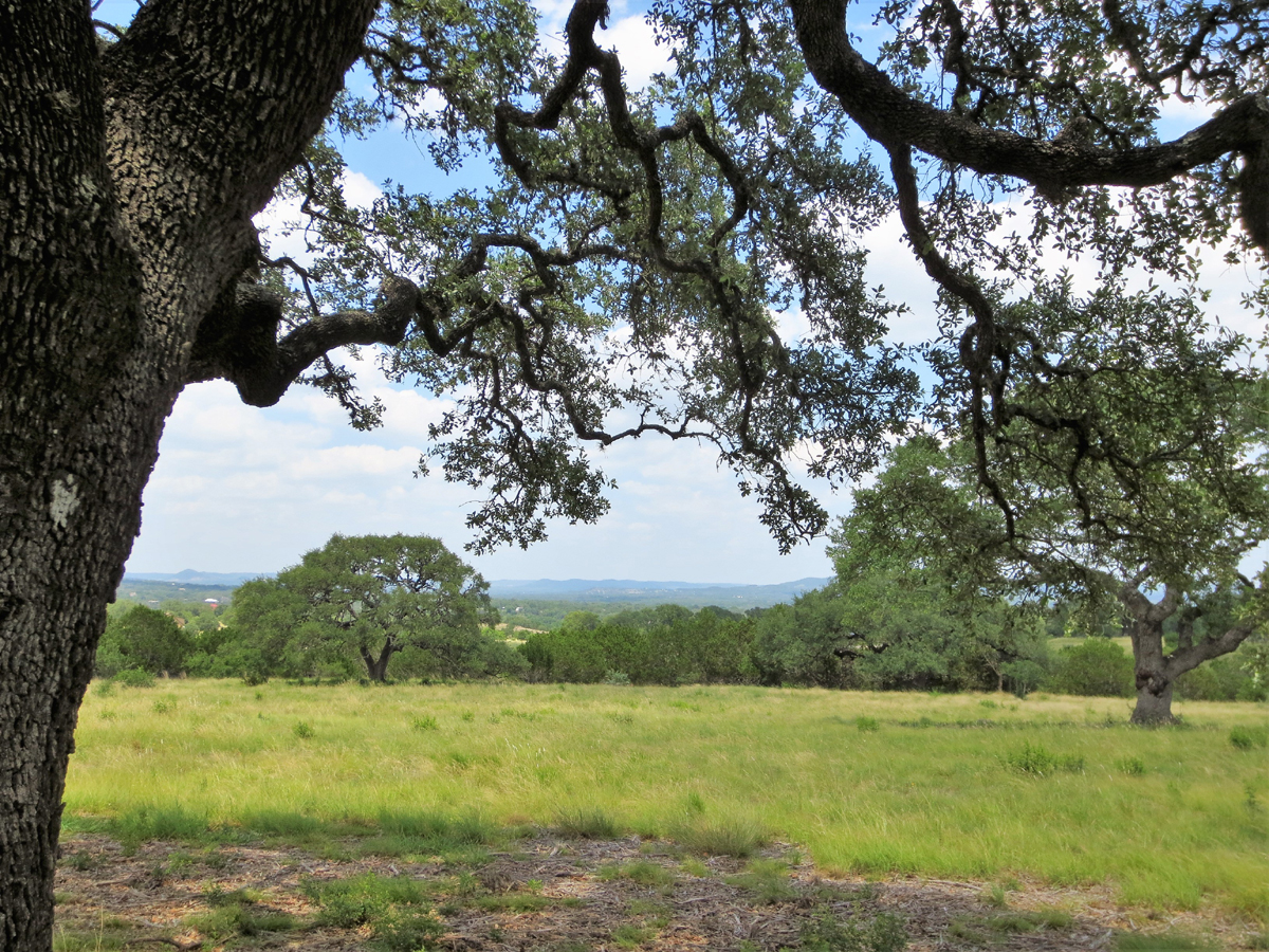 View from under the oak tree of hills in the distant
