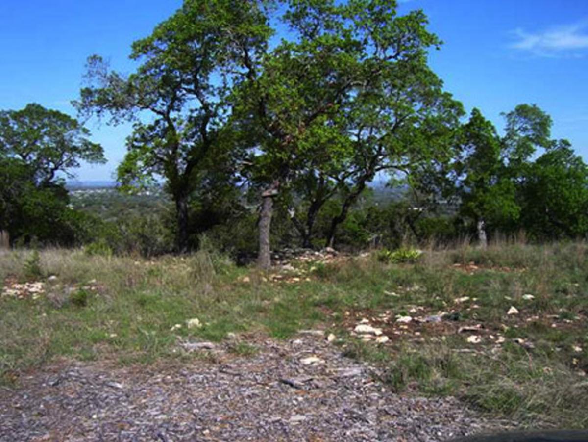 A cluster of oak trees.