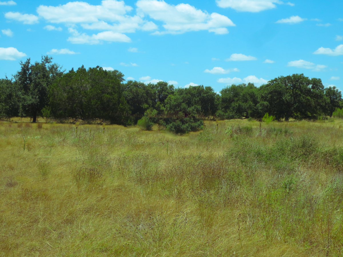 Level building lot in Bridelgate Ranch with oaks / L0241    Listed for sale with Gail Stone Realty  830.796.4640