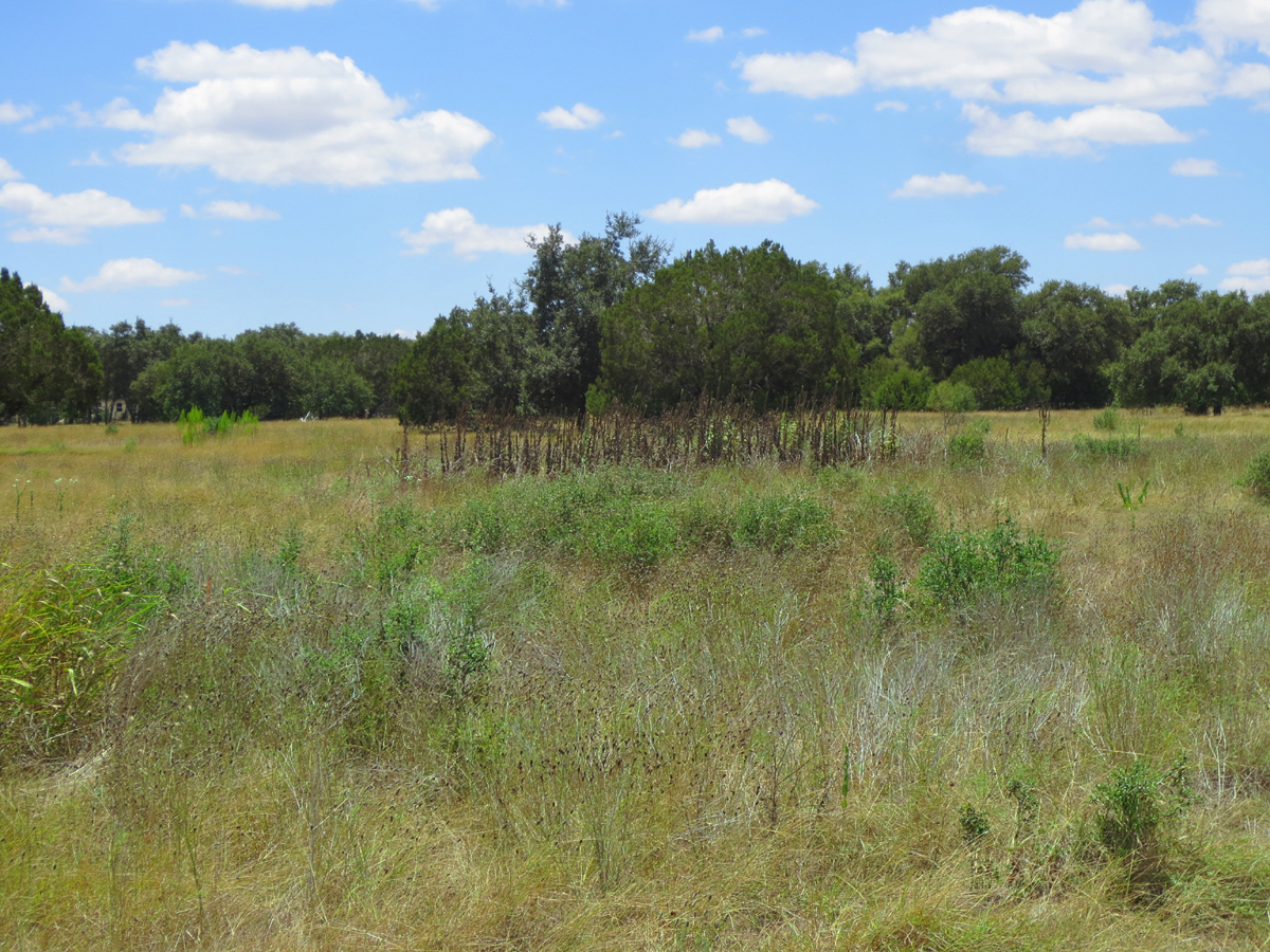 Light brush on this property provides great cover for birds and small wildlife.