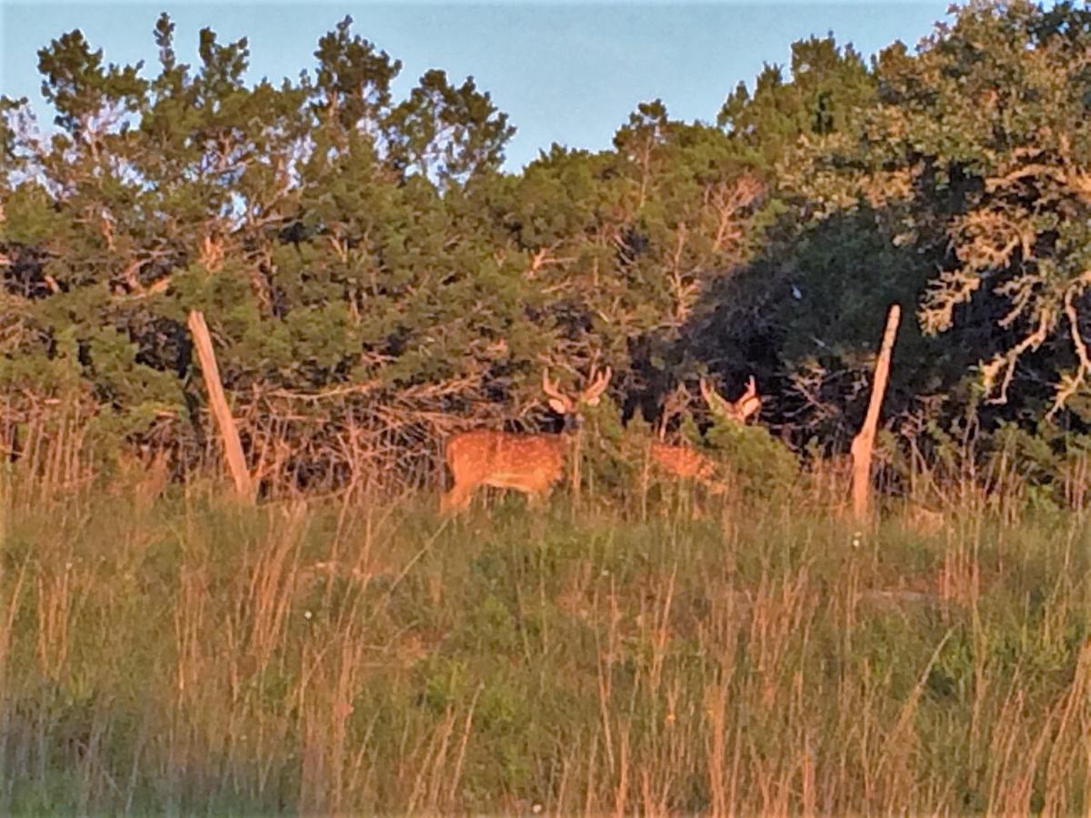 Wildlife on this property make sunsets more enjoyable.