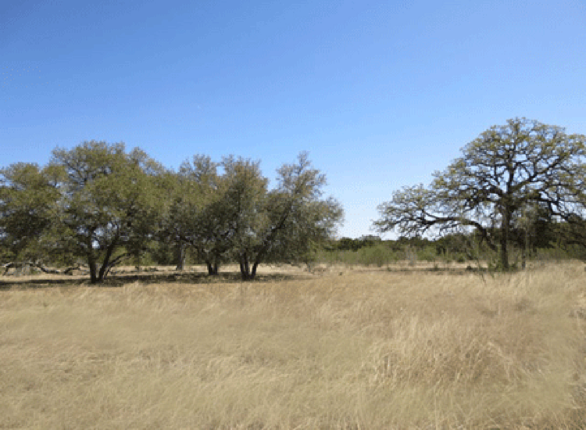 L0178/2 Acre Homesite in Bridlegate Ranch. Listed for sale with Gail Stone Realty. 830.796.4640