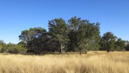 View from street towards oaks