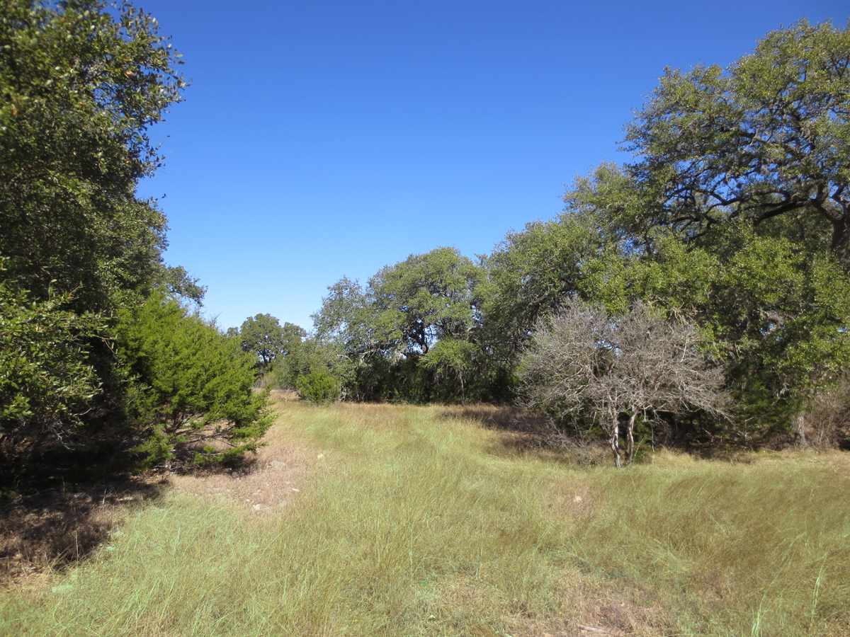 Lots of trees on this 2 acre parcel