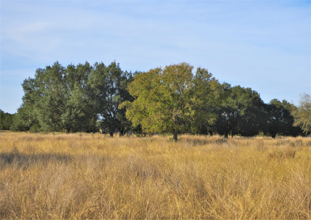 Different kinds of oaks present in different shades of green