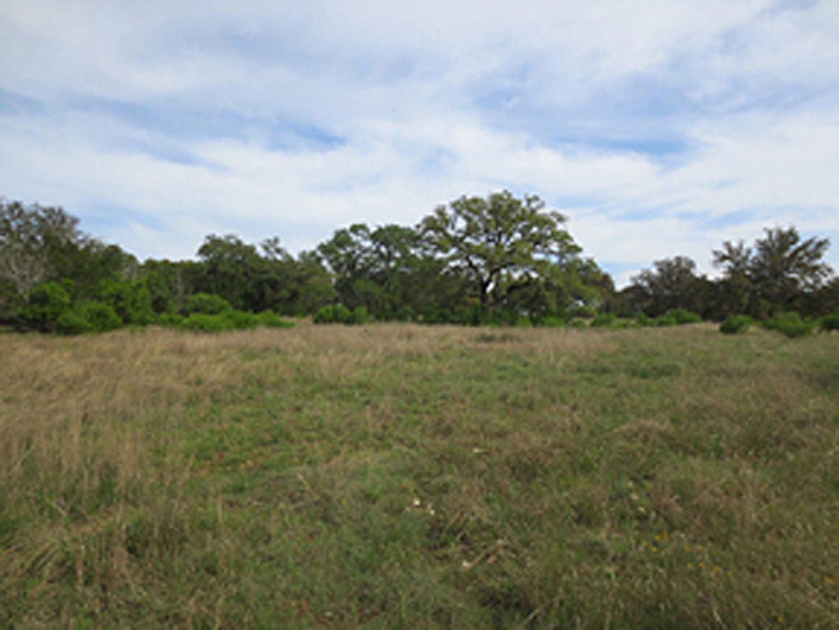 Level land on which to build near the oaks