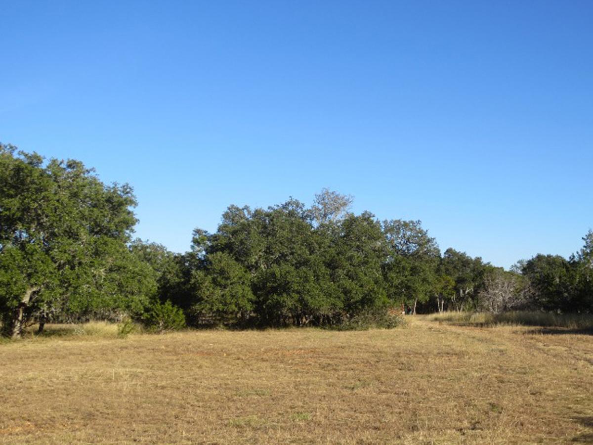 Looking back toward a big oak