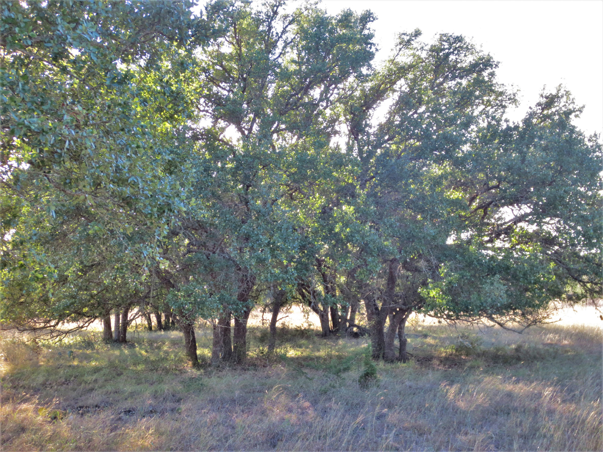 This grove shields the property from the afternoon sun
