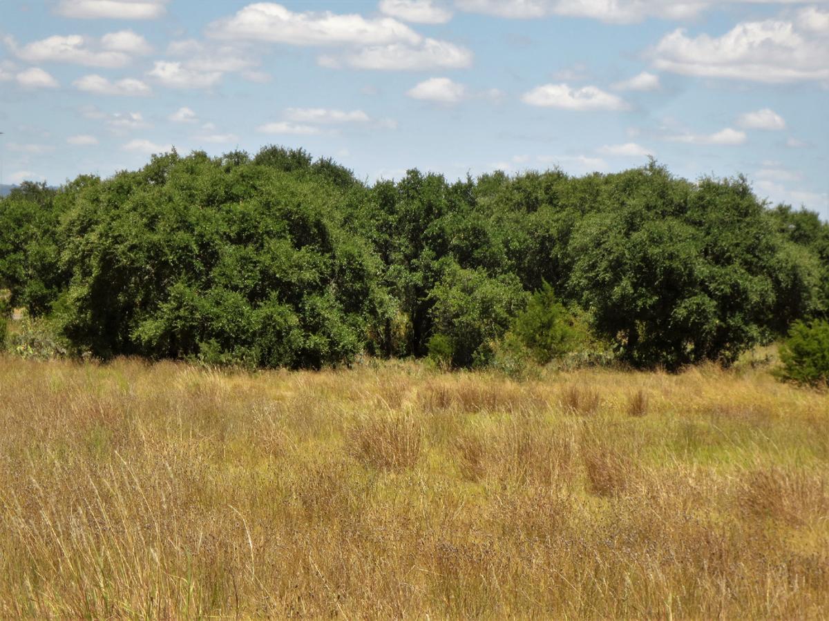 Oak grove for your inner Celt