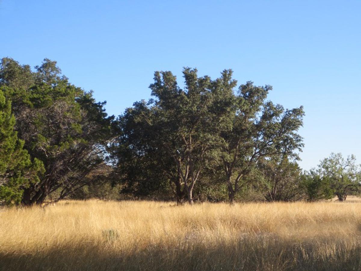 More fine trees