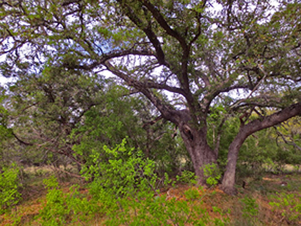Beautiful up close look at a tree