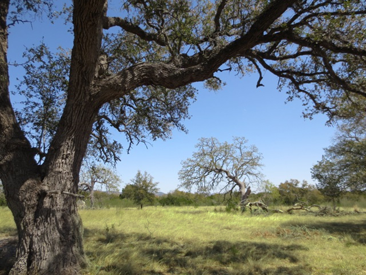 Looking out from under the oak