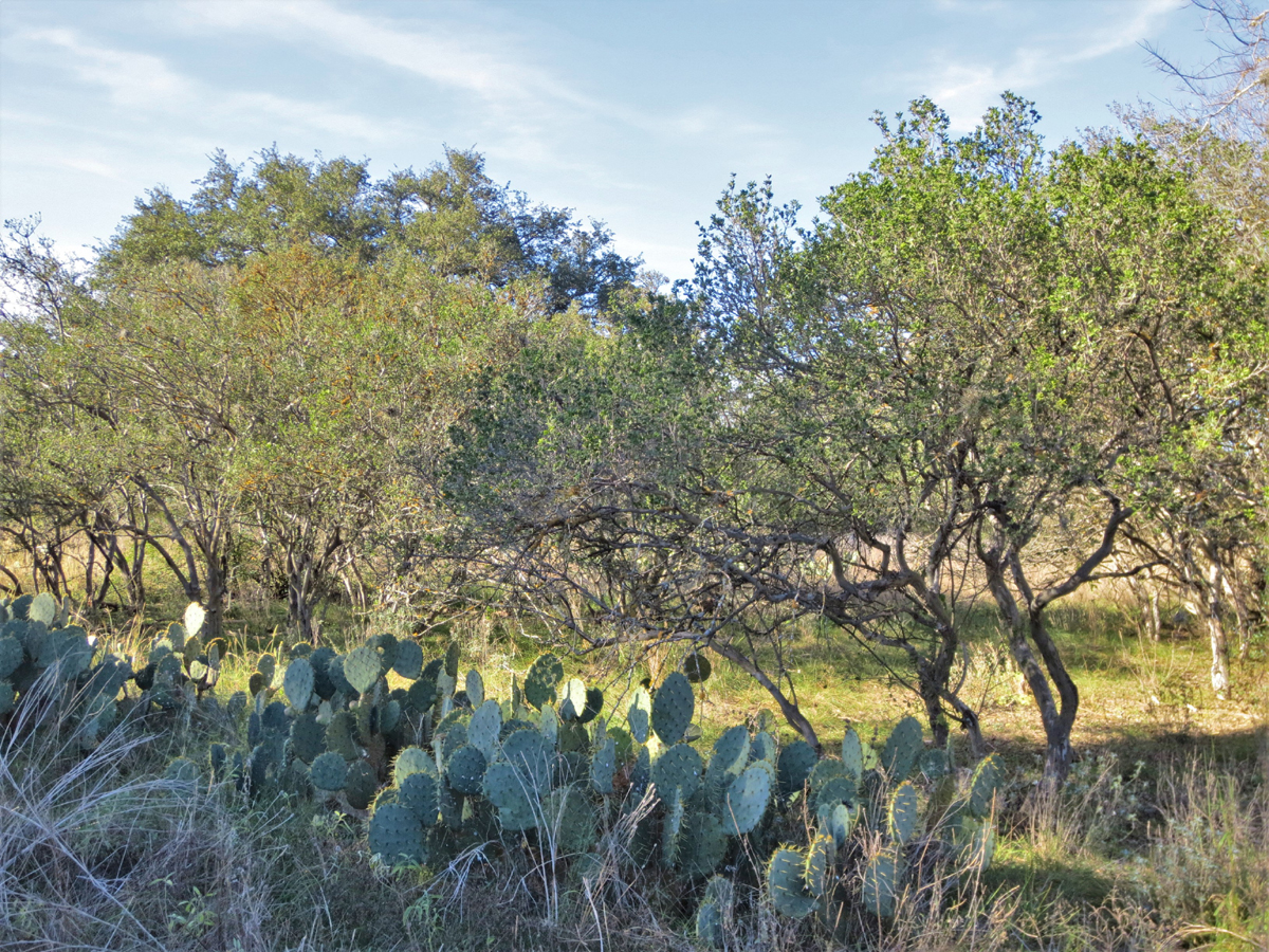 A little prickley pear for interest