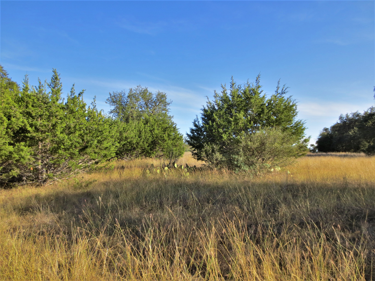 /Big Oaks for the backyard. Build your custom home with views of the hills and big oaks for the backyard. Call Gail Stone Realty in Bandera, Texas. 830-7964640