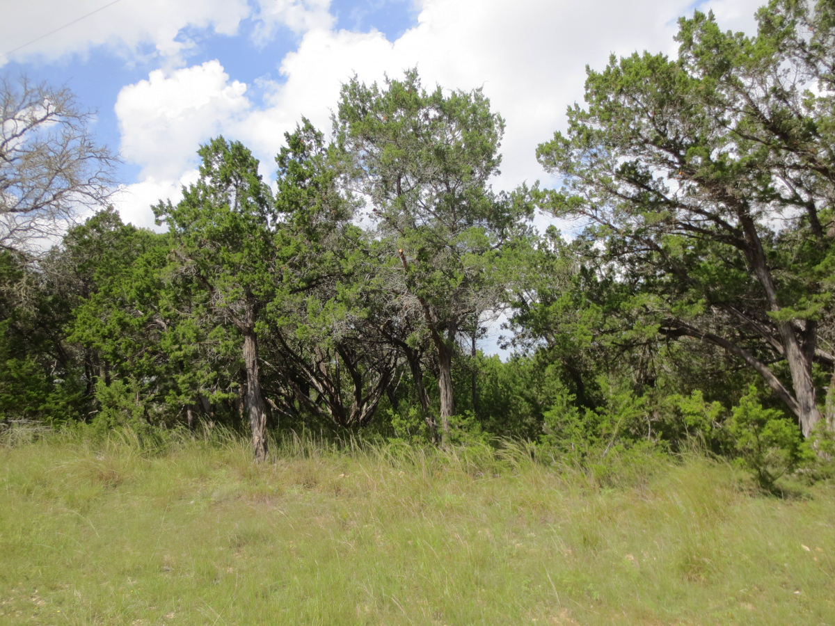 View of Comanche Cliffs Lot 11 Trees blue skies and clouds