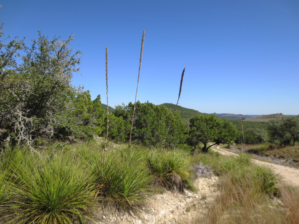 26.9 ACRES in Rio Hondo Ranch, Tarpley, 415 Juniper / L0283 Listed for sale with Gail Stone Realty