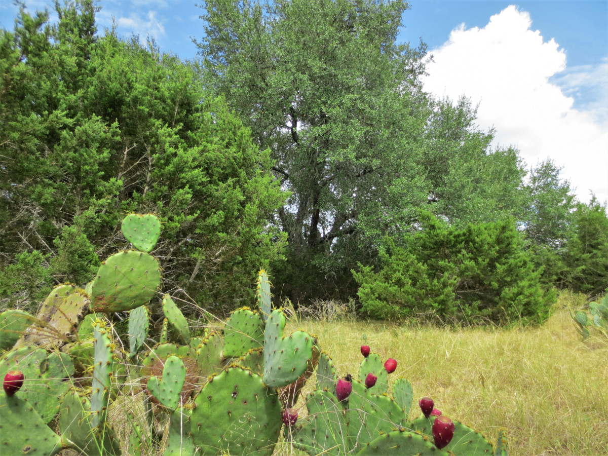 .57 Acre building lot on level land with mature oaks in Bandera River Ranch. L0272 Listed for sale with Gail Stone Realty. 830.796.4640