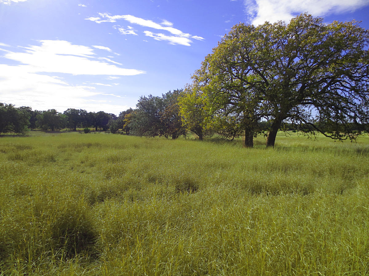 4.21 ACRES Lot 532 in Bridlegate Ranch. Call Gail Stone Realty in Bandera, TX. 830-796-4640