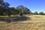 2.36 ACRES in BRIDLEGATE RANCH - SOLD