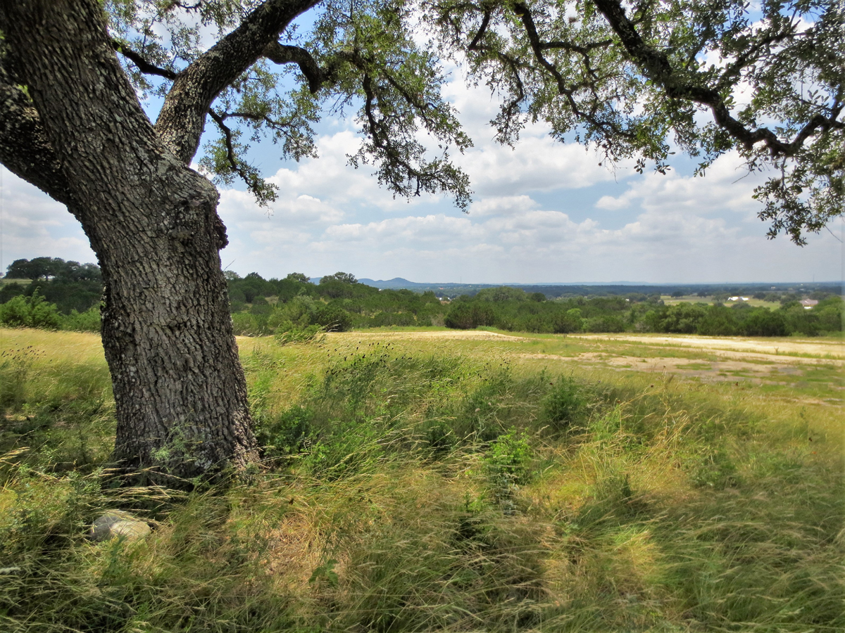 Mature oaks on this 2 acre homesite.