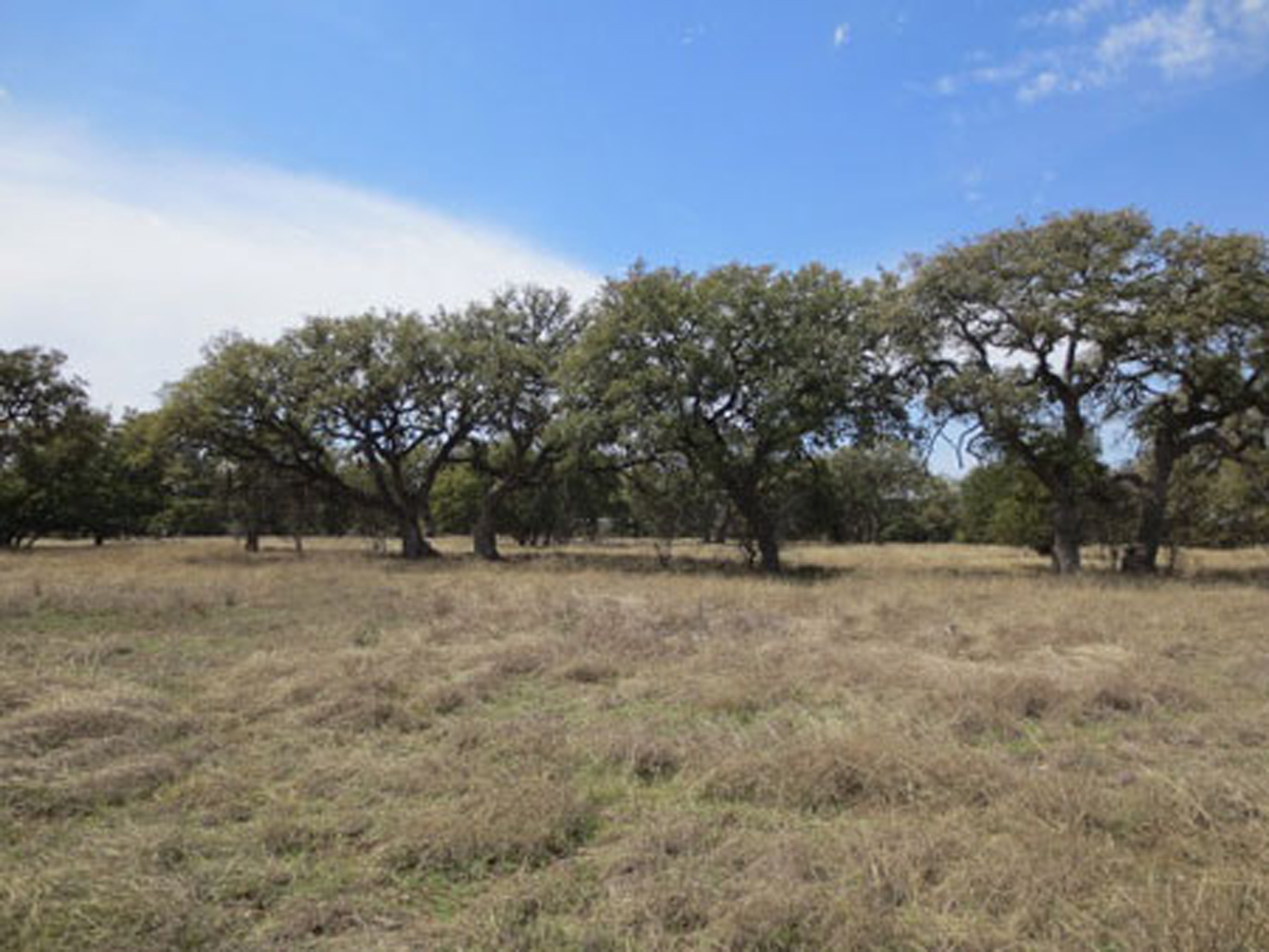 L0200/2 Acre Corner Lot in Bridlegate Ranch. Listed for sale with Gail Stone Realty. 830.796.4640