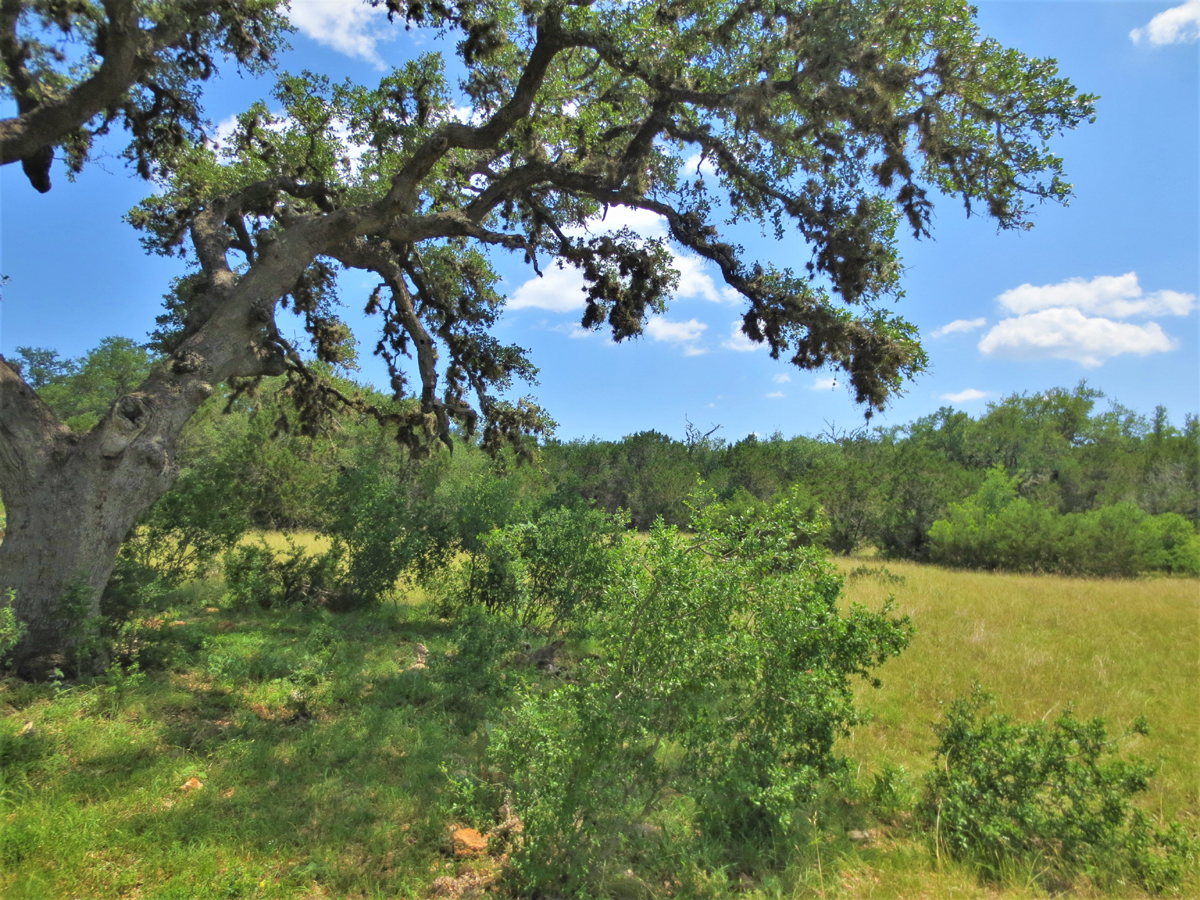 29 Acres at Mountain Valley Ranch. Listed for sale with Gail Stone Realty. 830.796.4640 / L0279