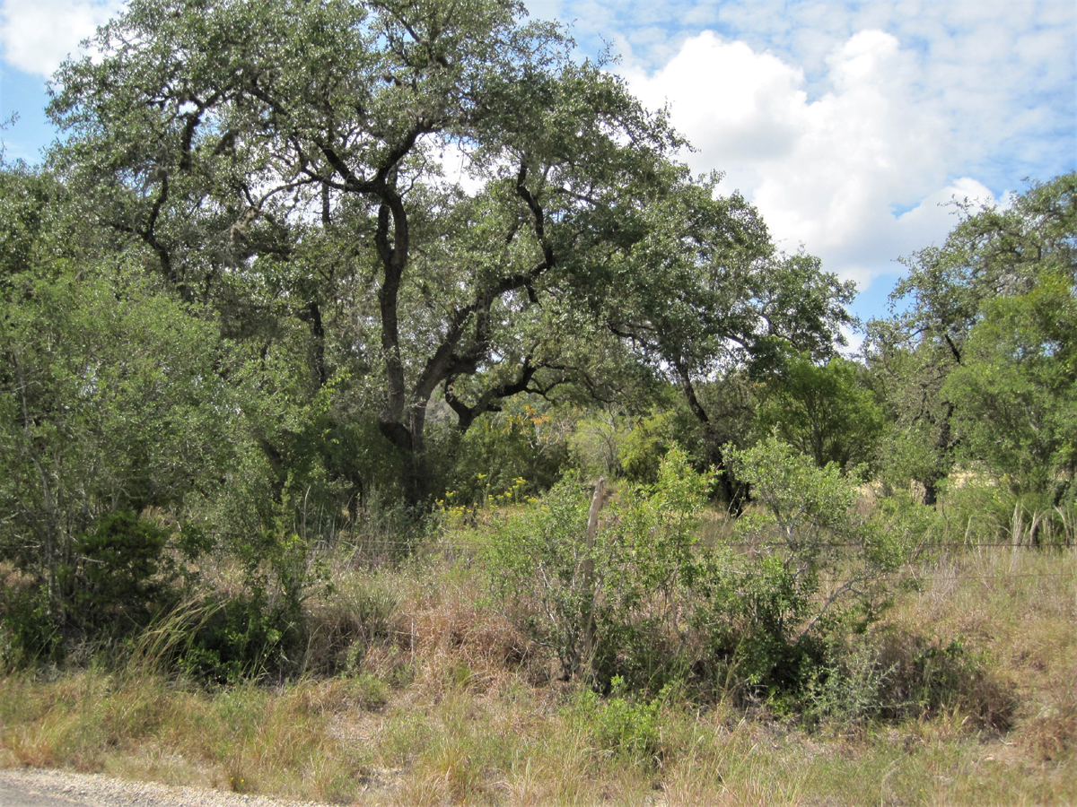 Pipe Creek Plaza Property - View of back acreage