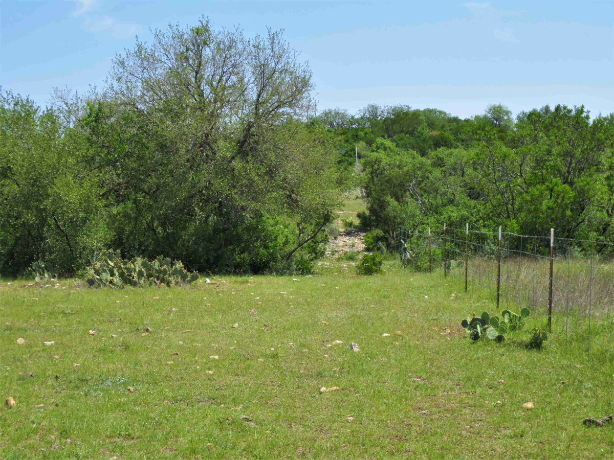 View of fence line, Trees and plants
