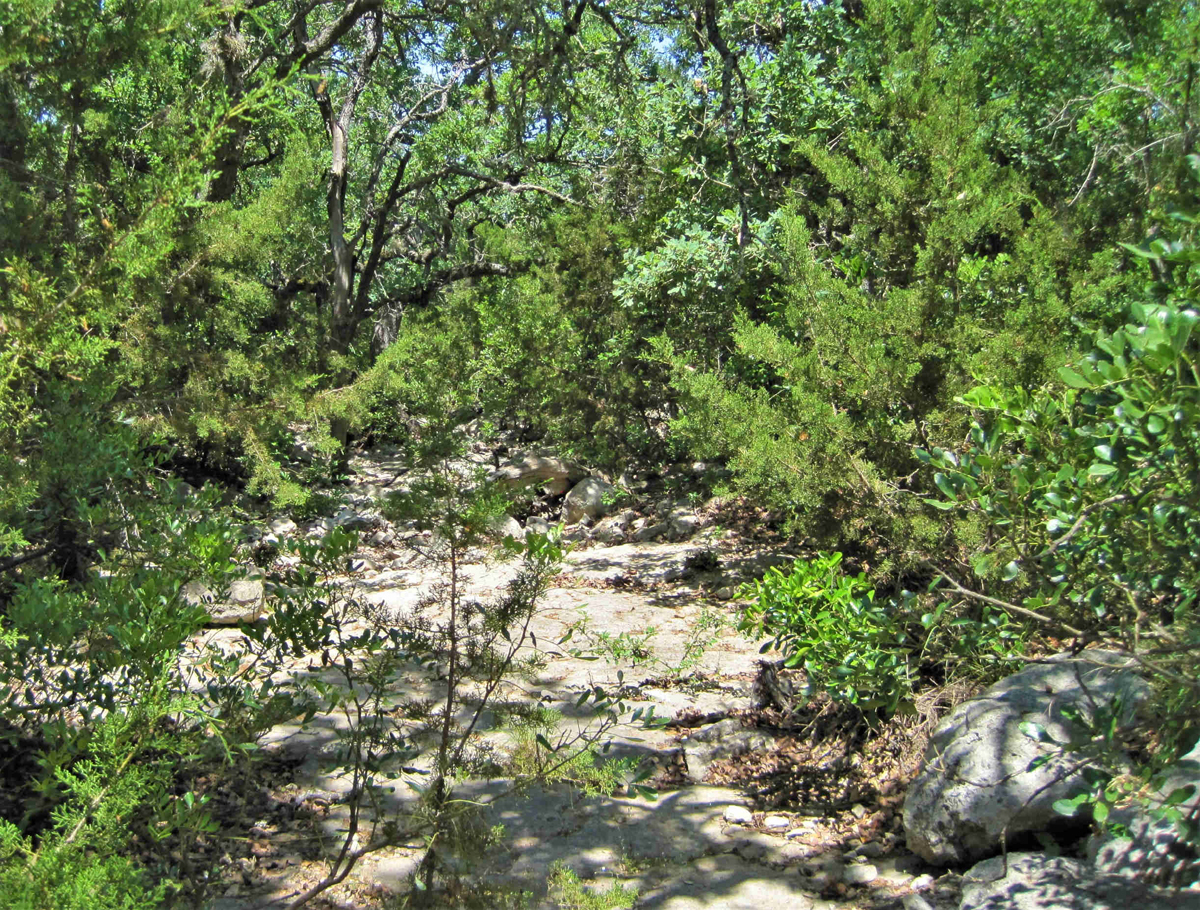 View of dry creek-bed, rocks & trees